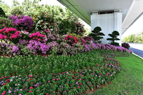创新原则:     打造厦门特色植物群落,在重要景观节点点睛式设置,突显